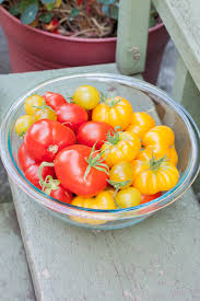 tips for growing tomatoes in the pacific northwest rake and make
