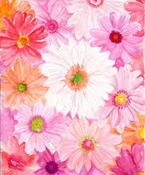 gerbera daisies watercolor painting print of pink coral