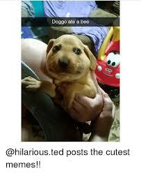 Cutest Memes - doggo ate a bee posts the cutest memes meme on me me