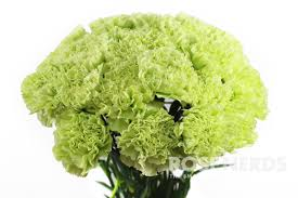 Wholesale Carnations Wholesale Lime Green Carnations Bulk Lime Green Carnations