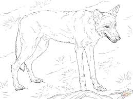 red wolf coloring page free printable coloring pages