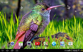 live halloween wallpapers for desktop hummingbirds live wallpaper android apps on google play