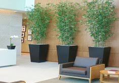 Plants For Office Water Fountain For Office Home Design Photo Gallery