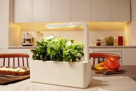 click u0026 grow smart herb garden indoor grow kit with basil thyme