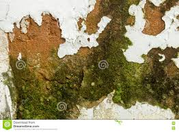 mold fungus peeling flaking paint due to rising damp stock photo