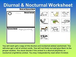 diurnal and nocturnal animals diurnal animals diurnal is a tricky