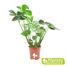 plantes dépolluantes chambre à coucher plante depolluante les plantes dacpolluantes dintacrieur les trucs