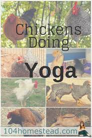 Backyard Chicken Blogs by 983 Best Images About Backyard Chicken Project On Pinterest The
