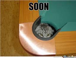 Soon Cat Meme - soon cat by popey69 meme center
