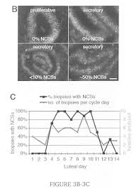 patent us20090215074 detection of the nucleolar channel system