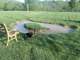 backyard duck pond created in a weekend could be finished with a