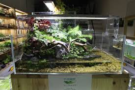 a shop in china aquascaping world forum