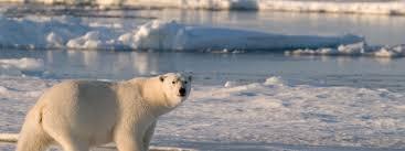 polar regions habitats wwf
