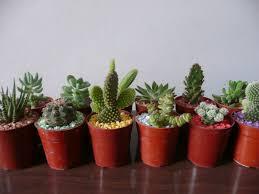cactus decoration google search dirt road basement cactus