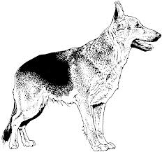 german shepherd dog coloring page for coloring pages omeletta me