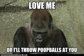 Poop Meme - animal capshunz throwing poop funny animal pictures with