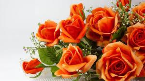 orange roses wallpapers desktop