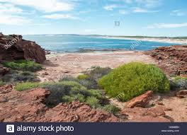 native indian plants red bluff beach with turquoise indian ocean waters red sandstone