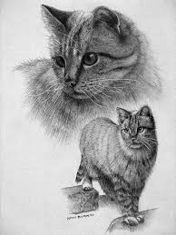 beautiful sketches to draw 19 cat drawings art ideas sketches