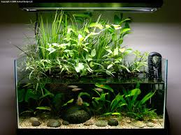 Planted Aquarium Aquascaping Using Plants To Cover Up Riparium Planters Aquascapes