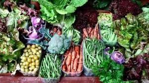 a beginner u0027s guide to planting a vegetable garden wral com