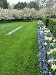 garden hedges u2026 hedge garden pinterest garden hedges