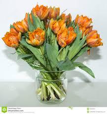 orange tulips in vase stock photo image 40326840