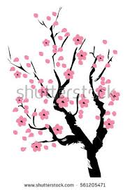cherry blossom trees stock images royalty free images vectors