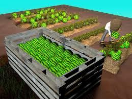 3 ways to grow watermelons wikihow