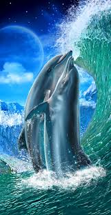 164 best my love for dolphin u0027s images on pinterest dolphins