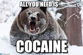 Coke Bear Meme - all you need is i fucking love cocaine bear meme on memegen