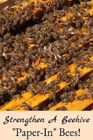 157 best bee keeping images on pinterest bee keeping bees knees