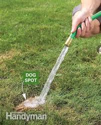 A couple puts pea gravel and plantings in an area designated as an outdoor  dog potty