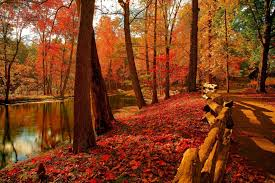 nature sky river water forest park trees leaves colorful autumn