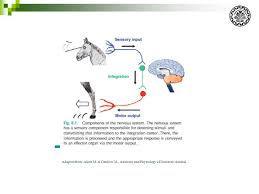 Fundamental Anatomy And Physiology Advanced Physiology Part 1 Neuronal System By A Riasi Phd In