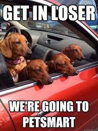 Weiner Dog Meme - funny dachshund pics home facebook