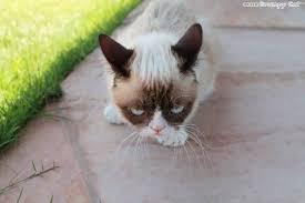 Grumpy Meme Face - grumpy meme face keywords and pictures