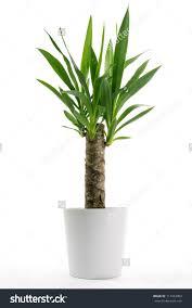 white pot plants u2013 rseapt org