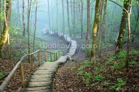 foggy forest stairway wallpaper wall mural wallsauce usa foggy forest stairway wall mural photo wallpaper