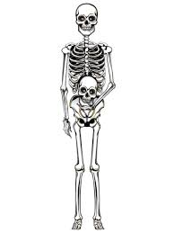 Halloween Skeleton Cut Out by Day Of The Dead Decorations Partynutters Uk
