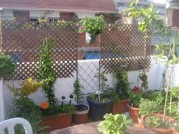 pflanzen f r balkon wind und sichtschutz fr balkon mit blumen und pflanzen tolle