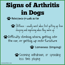 Leg Pain Going Down Stairs by Arthritis In Dogs Seven Ways You Can Ease The Pain
