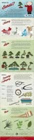 best 25 bonsai ideas only on pinterest bonsai garden bonsai