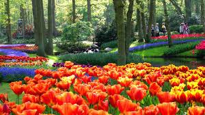 flower garden in amsterdam private dutch countryside u0026 keukenhof tour amsterdam city tours