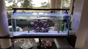 aquarium shop buy or purchase gold fish hikari fish and tropical