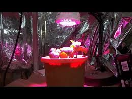 lights to grow herbs indoors growing herbs indoors with the 15 watt sansi led grow light youtube