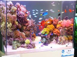 best 25 marine tank ideas on reef aquarium saltwater