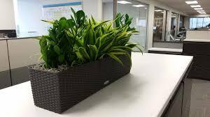 interior plants for credit union plantopia interior plant service