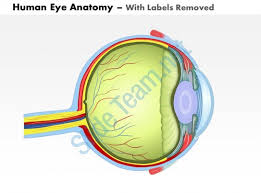 Anatomy Of Human Eye Ppt 0514 Human Eye Anatomy Medical Images For Powerpoint Powerpoint