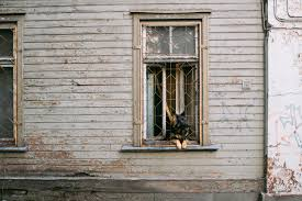 dog in the window u2013 free photo on barn images
